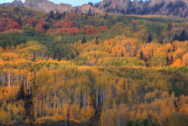 THE ABOUNDING COLORS OF AUTUMN  by Bill Sherrell