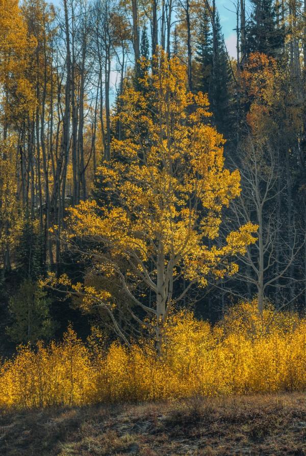 TREE OF FIRE by Bill Sherrell