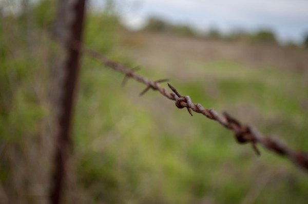 Barbed Focus by Brad Jolly
