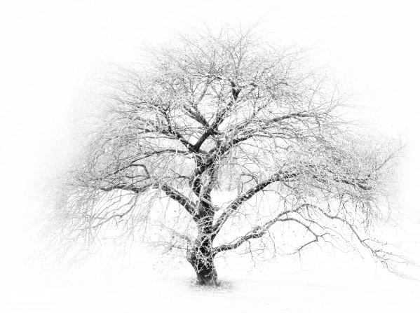 Frozen by Brendan McMillan