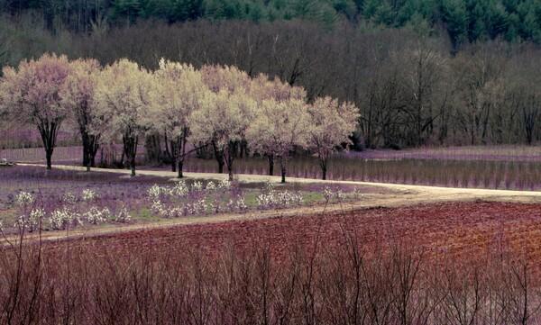 Lavender dreams by Brett Noel