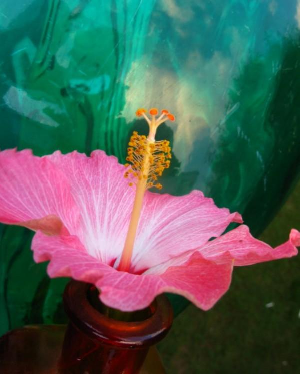 Flower Love Oh by Brett Noel