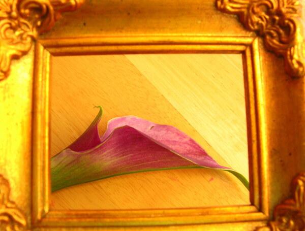 Gilded Lilly  by Brett Noel