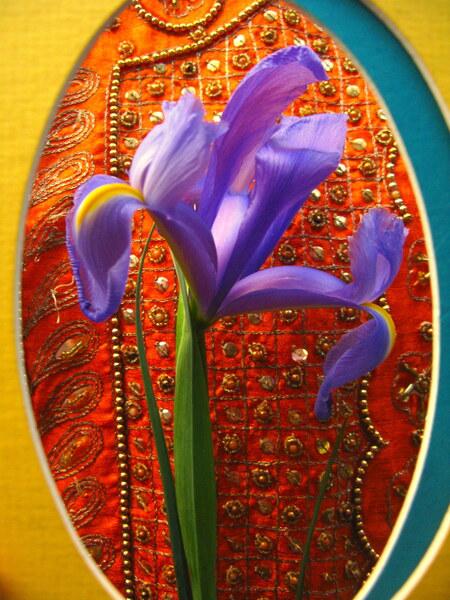 Eyeing an Iris by Brett Noel