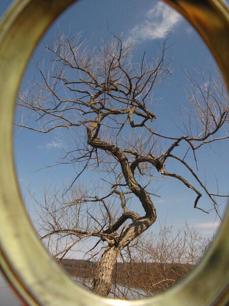 When trees dance by Brett Noel