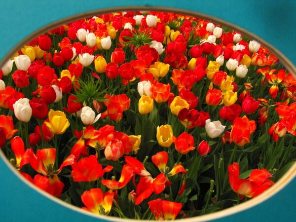 Parade of Tulips by Brett Noel