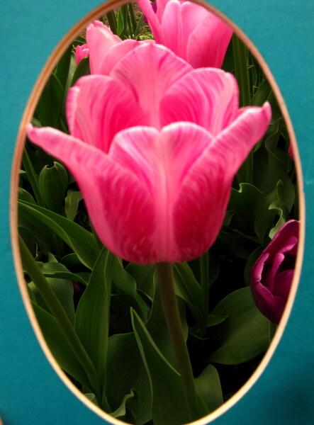 Flower Love by Brett Noel