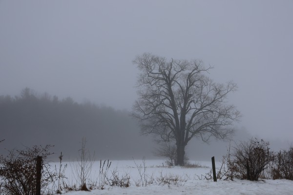 Tree in the Mist by Brian Camilleri Photography