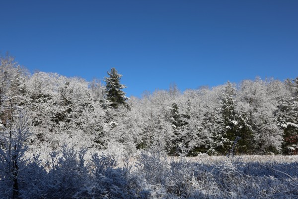 Snowy Forest by Brian Camilleri Photography