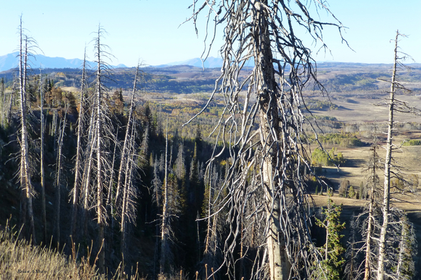 Gnarled Pine Overlook by Brian Shaw