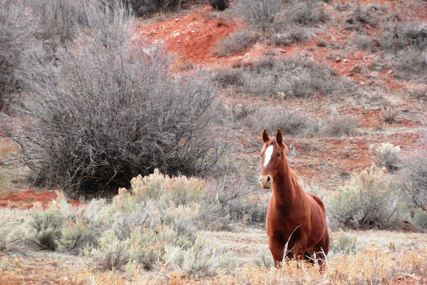 Star Horse in Red Clay by Brian Shaw