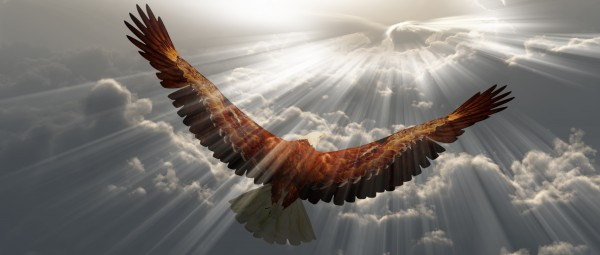 Eagle in the sky by Bruce Rolff
