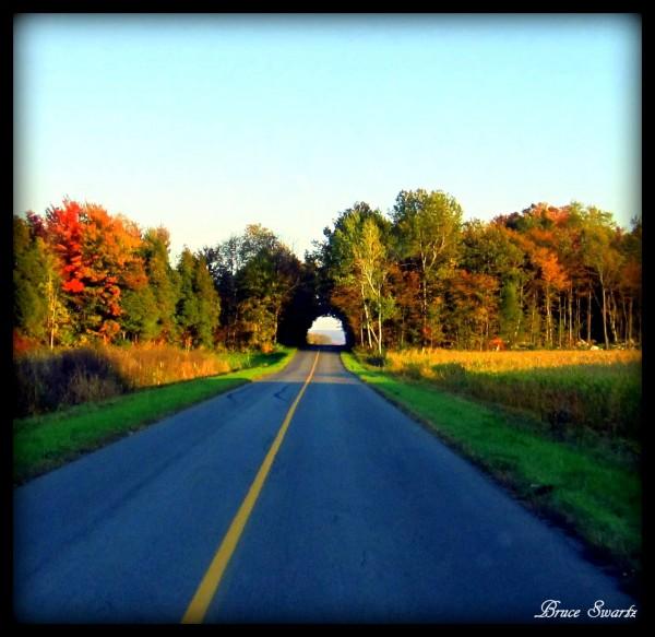 Tree Tunnel Fall Season 2 by Bruce Swartz