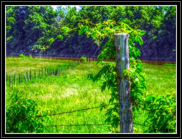 Fence & Vines HDR by Bruce Swartz