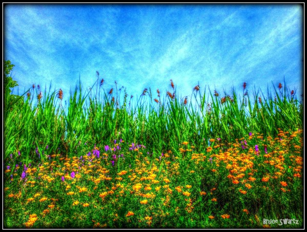 Wild Flowers in HDR by Bruce Swartz