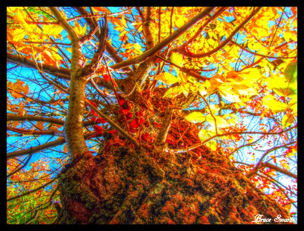 Red Yellow Tree Fall Season HDR by Bruce Swartz