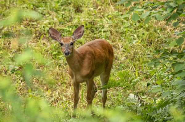 Oh Deer by Bunnoffee Photography