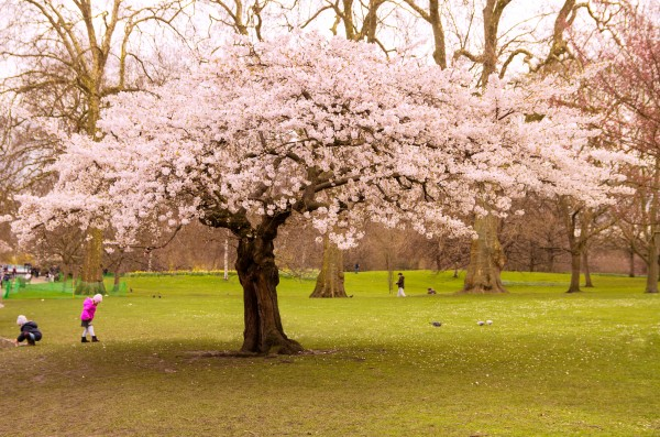 Blossom Tree by Bunnoffee Photography