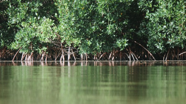 Mangroves by By the C Media
