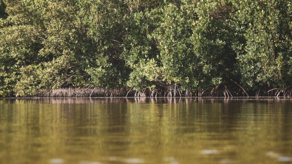 Mangroves meet water by By the C Media