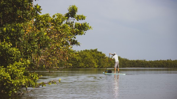 Paddleboarding in the Mangroves by By the C Media