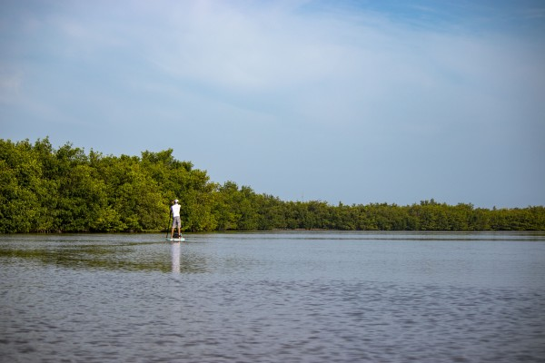 mangrove paddleboarding by By the C Media