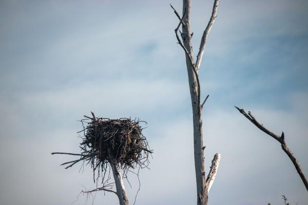 Osprey nest by By the C Media