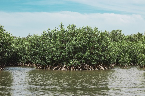 Mangrove Island by By the C Media