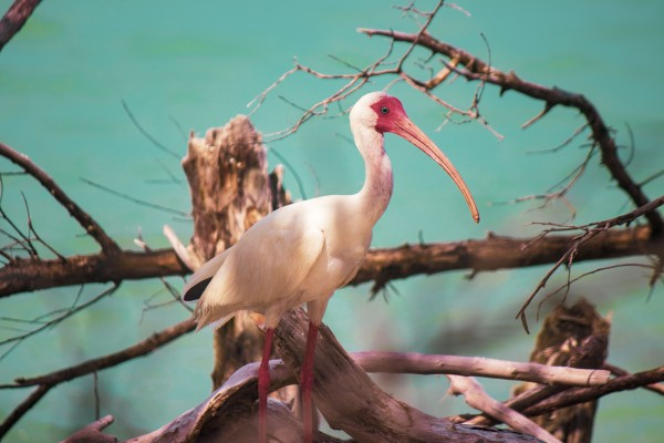 Ibis at the Beach by By the C Media