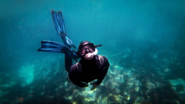 freedive by By the C Media