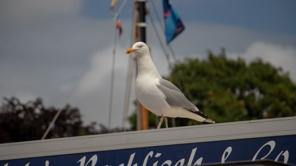 SeaGull by C-Nick Photography