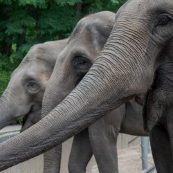 Hungry Hungry Elephants by C-Nick Photography