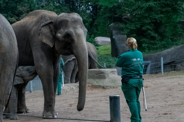 Elephant In Trouble by C-Nick Photography