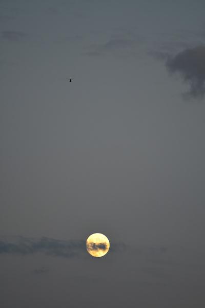 Clair de lune by CEDANSBOITE