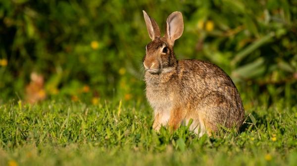 Bunny Portrait by Cameraman Klein