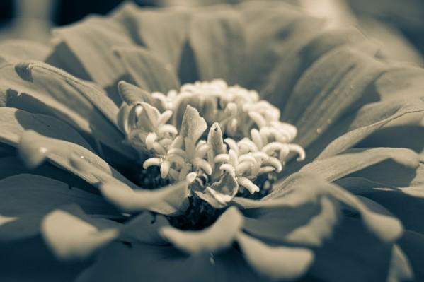 Black and White Flower by Cameraman Klein