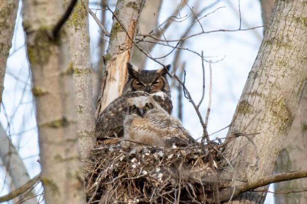 Owl by Cameraman Klein