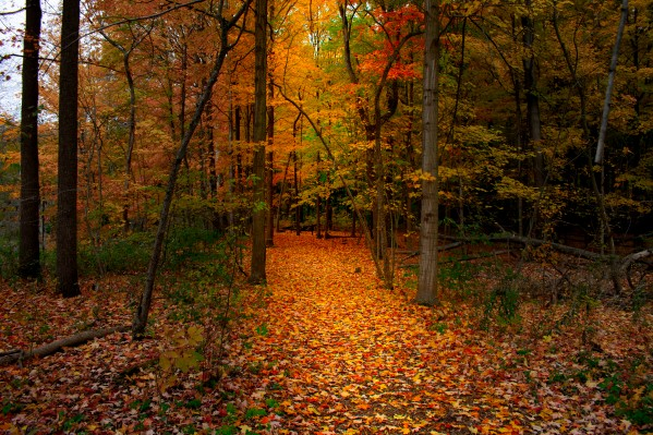 Path in the Woods by Cameraman Klein