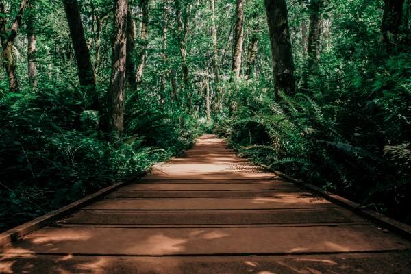 Boardwalk by Cameron Grey
