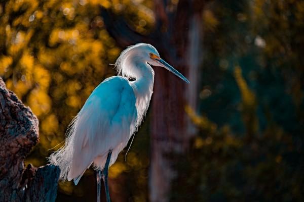 Heron by Cameron Grey
