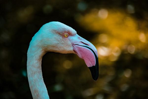 Flamingo by Cameron Grey