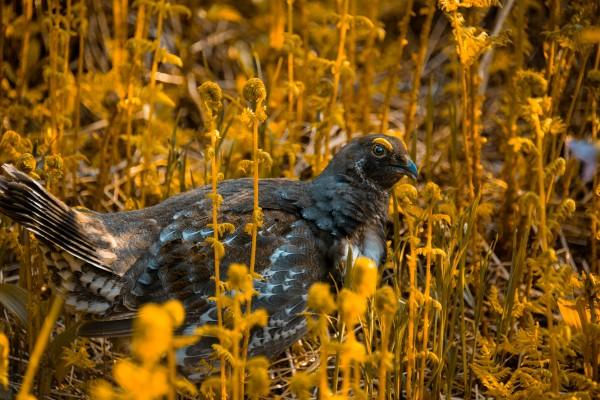 Golden Bird by Cameron Grey