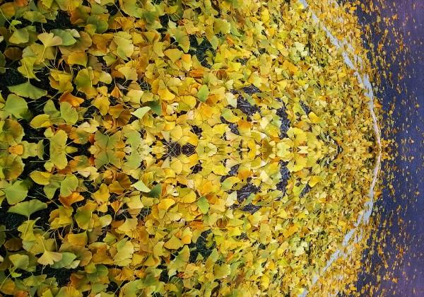 Autumn1 by Carlos Manzcera