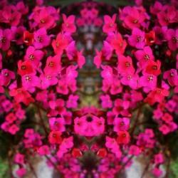 flower29 by Carlos Manzcera