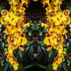 flower55 by Carlos Manzcera