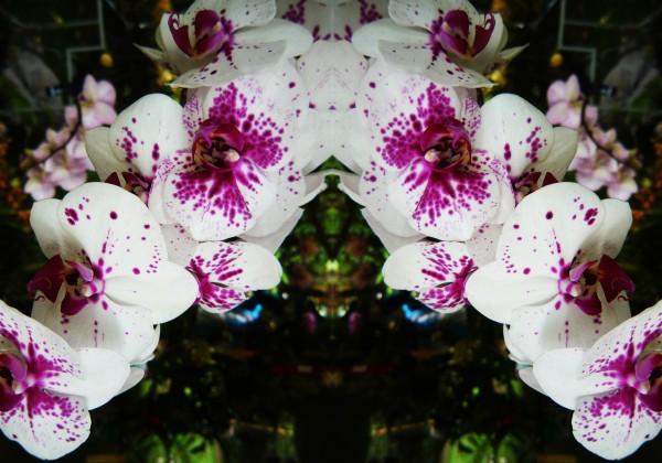 flower63 by Carlos Manzcera
