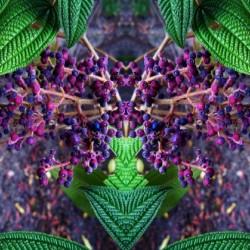 flower7 by Carlos Manzcera
