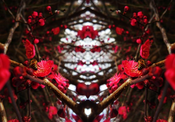 flower83 by Carlos Manzcera