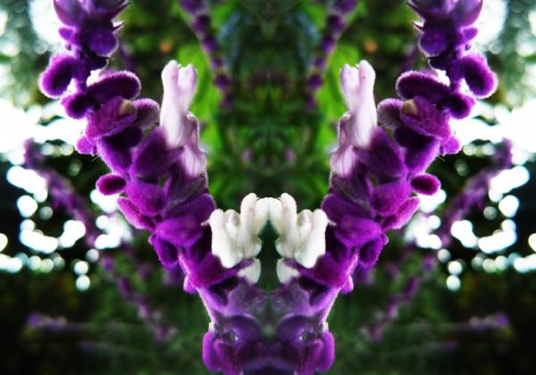 flower89 by Carlos Manzcera