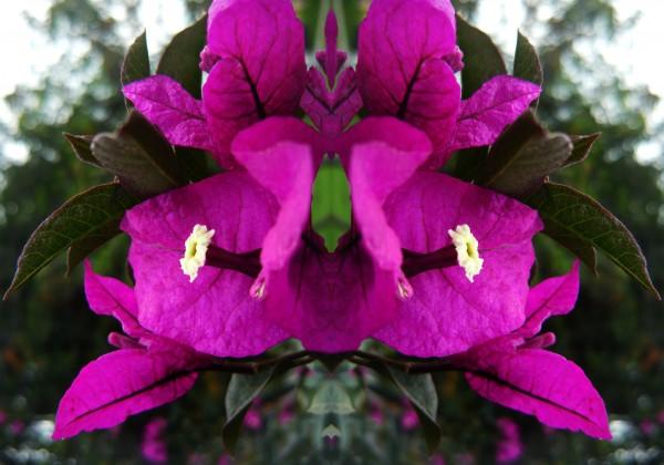 flower90 by Carlos Manzcera